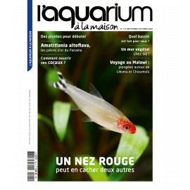 Aquarium à la Maison N°141 - Un nez rouge peut en cacher deux autres