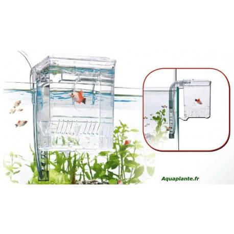 Mini Easy-Breeding Box