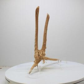 Racine Spider - SPW7