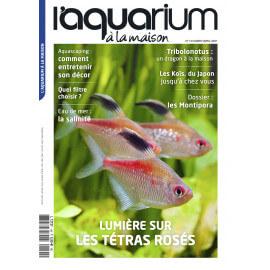 Aquarium à la Maison N°144 - Les Titras Rosés