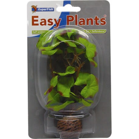 Plante Artificielle Hydrocotile sp
