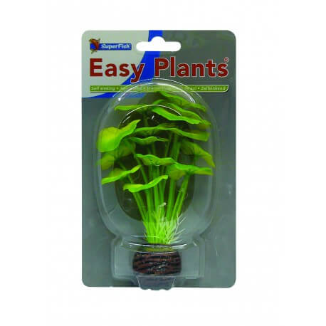 Plante Artificielle Hydrocotile sp 2