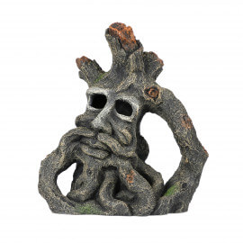 Aqua Della Jacob root