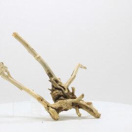 Racine Spider Golden Moor - SGMTG1