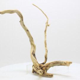 Racine Spider Golden Moor - SGMTG2