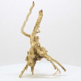 Racine Spider Golden Moor - SGMTG3