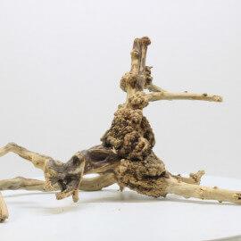 Racine Spider Golden Moor - SGMTG6