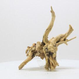 Racine Spider Golden Moor - SGMTG9