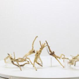 Racine Spider Golden Moor - SGMTG
