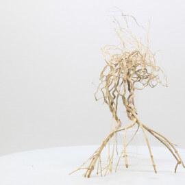 Racine Tree Roots - TRTDS1