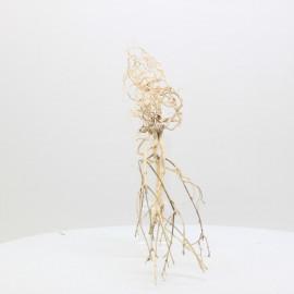 Racine Tree Roots - TRTDS2