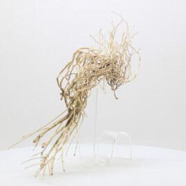 Racine Tree Roots - TRTDS3