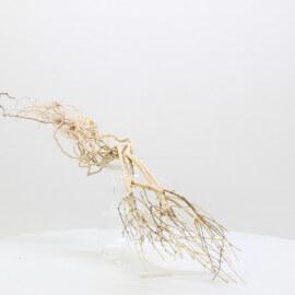 Racine Tree Roots - TRTDS4