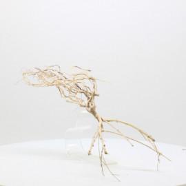 Racine Tree Roots - TRTDS5