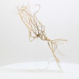 Racine Tree Roots - TRTDS8