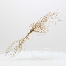 Racine Tree Roots - TRTDS9