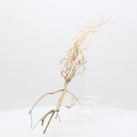 Racine Tree Roots - TRTDS11