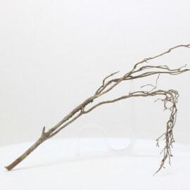 Nano Root - NRCG 1