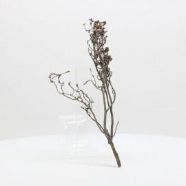 Nano Root - NRCG 2