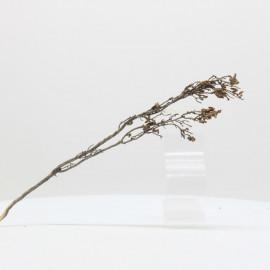 Nano Root - NRCG10