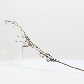 Nano Root - NRCG11