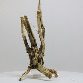 Racine Spider Golden Moor - SGMGT4