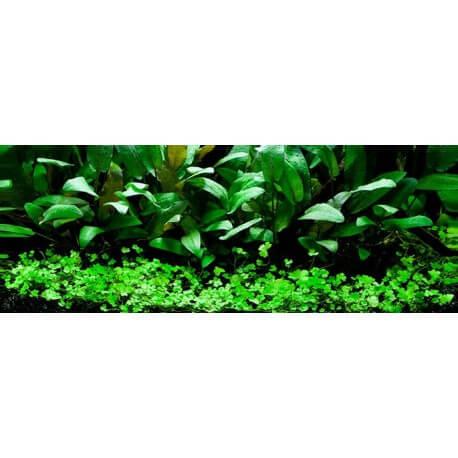 Lots de plantes d 39 aquarium pour d butant paysage for Commander des plantes