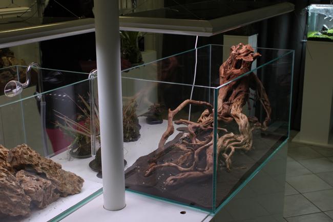 Le showroom Aquaplante : 60m2 d'aquascaping près de paris!