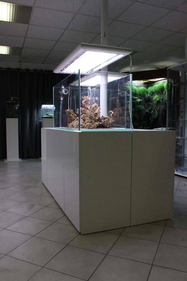 Les aquariums de notre showroom sont tous en verre ultra blanc pour un effet sensationnel!