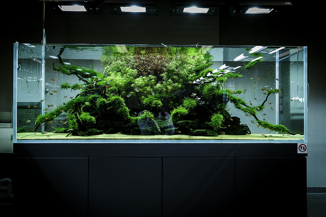 Materiel Aquariums Design Les Aquariums Ada