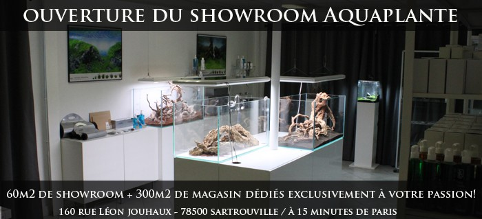 Le showroom Aquaplante : L'aquascaping vous tends les bras!
