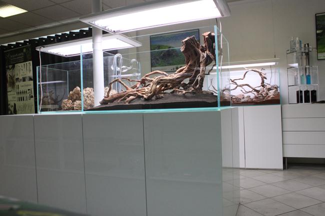Le hardscape de certains aquarium est déjà terminé