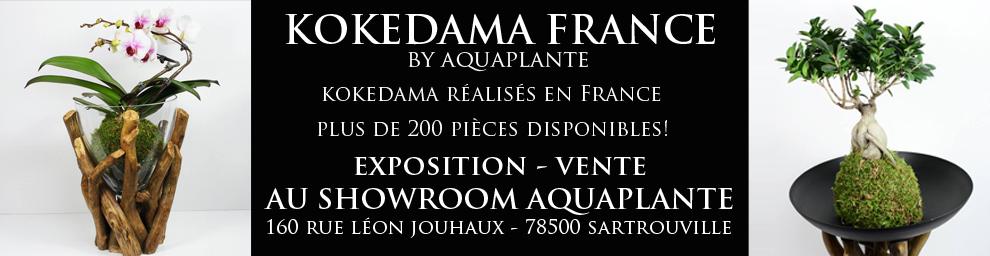 Une exposition - vente aura lieu chez Aquaplante du 27/03/2015 au 25/05/2015  160 rue Léon Jouhaux 78500 SARTROUVILLE.