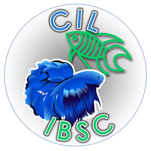 CIL ISBC