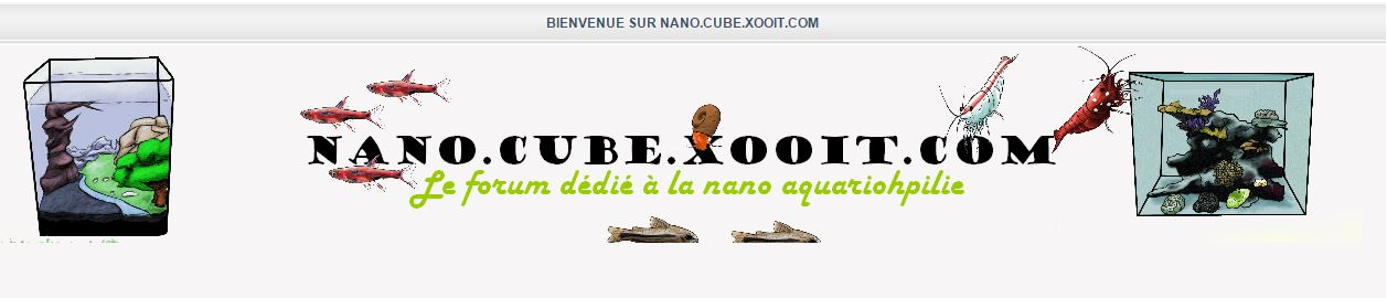 http://nano.cube.xooit.com/index.php
