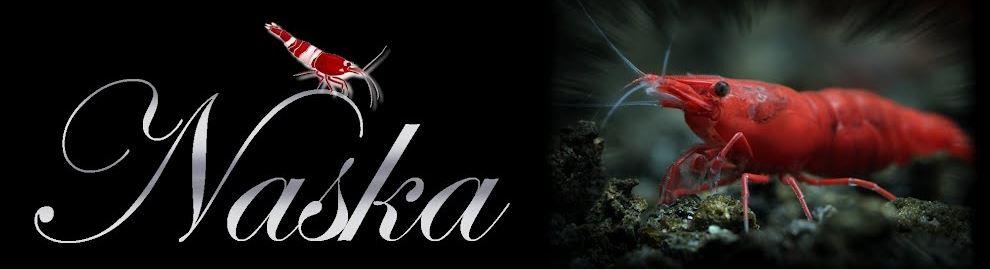 http://naska-shrimps.blogspot.com/