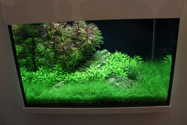 aquarium tropica 1