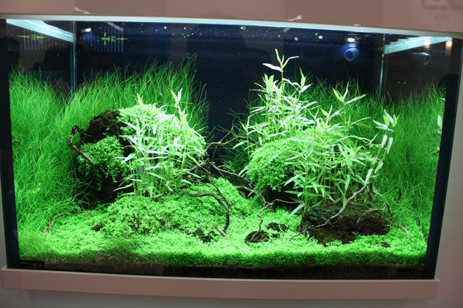 aquarium tropica 3