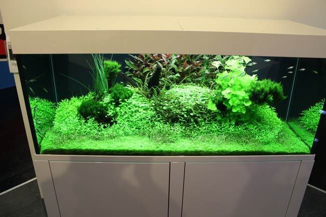 aquarium tropica 4