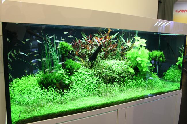 aquarium tropica 5