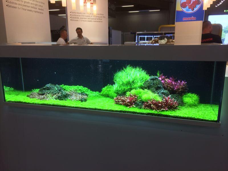 interzoo 2014 tropica aquarium plants. Black Bedroom Furniture Sets. Home Design Ideas