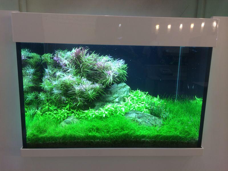 Aquarium Tropica 2