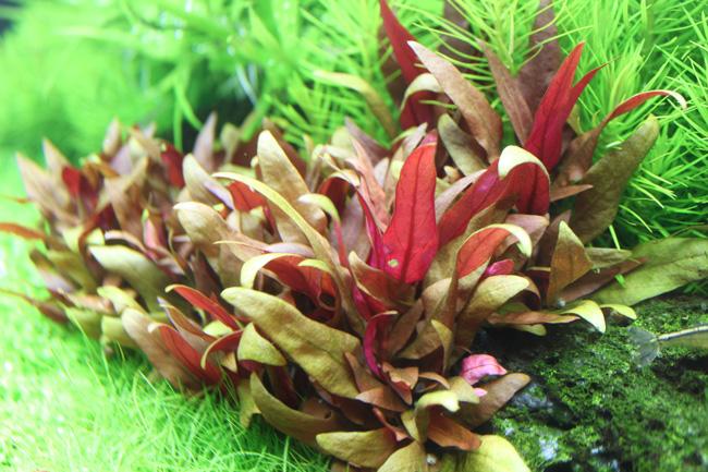 aquarium tropica 6