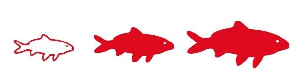 nourriture pour poissons de taille médium et grande