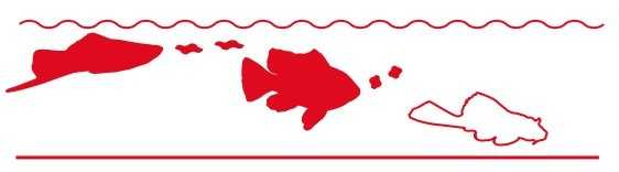 nourriture flottante pour aquarium
