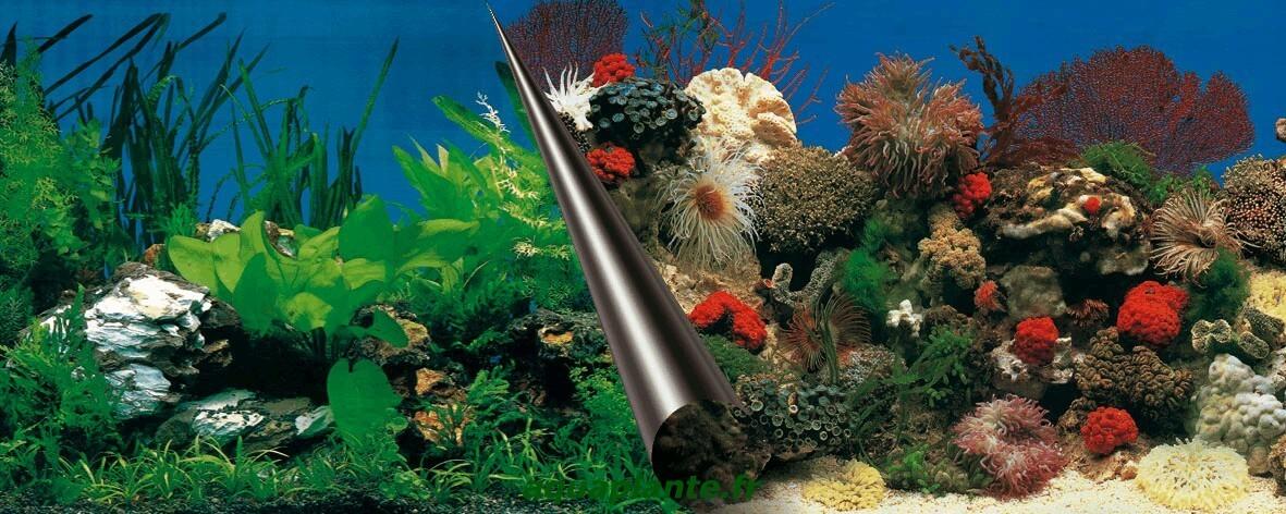 Posters de fond d 39 aquarium poster stone coral pour for Fond aquarium