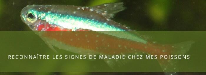 Identifier et guérir les maladies de mes poissons