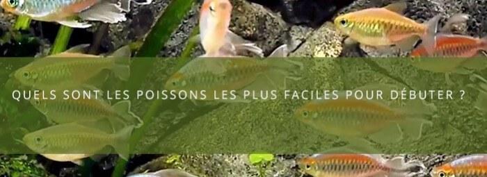 Quelles sont les poissons les plus simples pour débuter