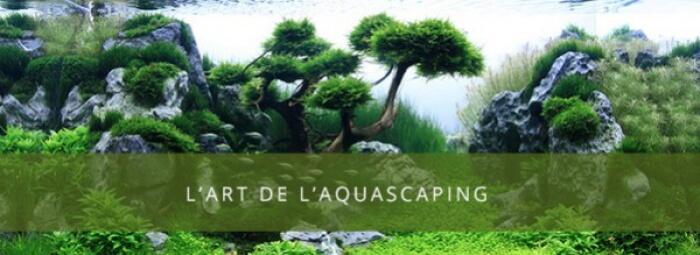 L'art de l'aquascaping
