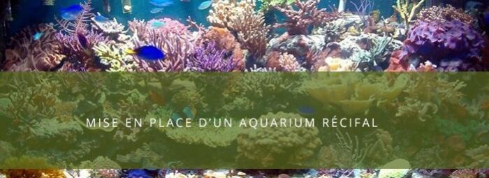 Débuter en aquariophilie : Le rodage d'un aquarium réci